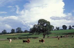 CAP PAYMENTS MUST BE TARGETED AT ACTIVE FARMERS