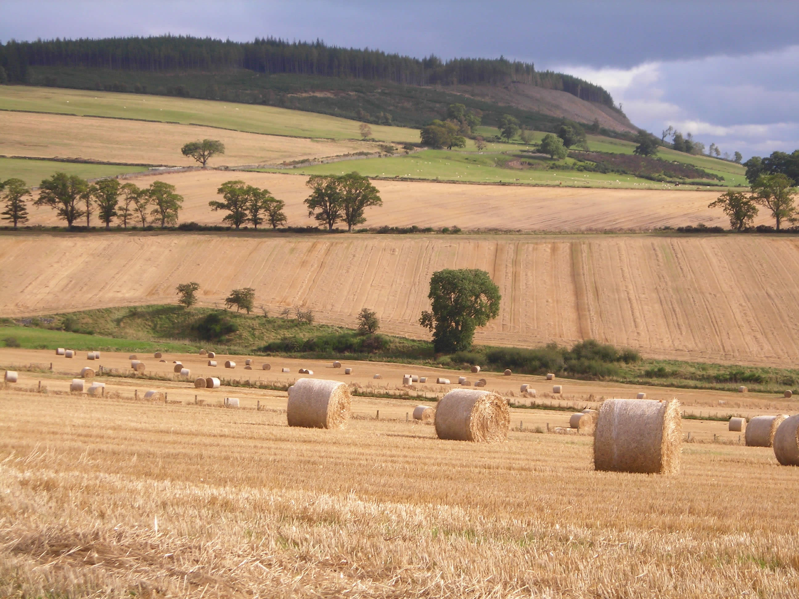 STFA CALLS FOR TENANTED FARMS TO BE EXEMPT FROM CHANGES TO SUCCESSION LAWS