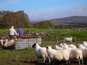 STFA EXPRESSES ALARM AT MOVES TO REPLACE TENANT FARMERS WITH TREES