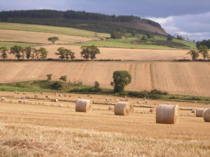 STFA plea to Scottish Government to halt court battle with tenant farmers