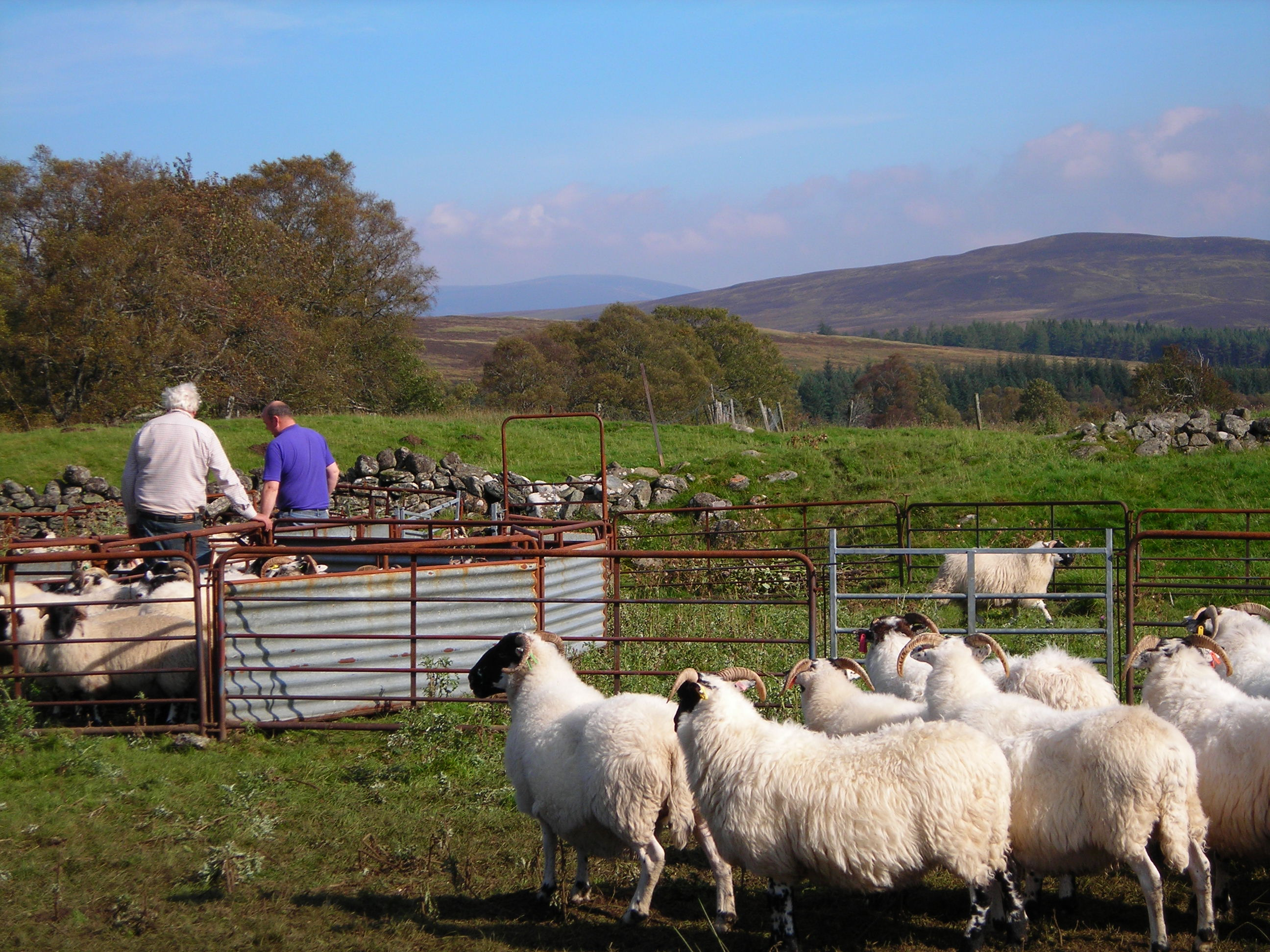 STFA welcomes the latest release of public sector land for the creation of starter farms